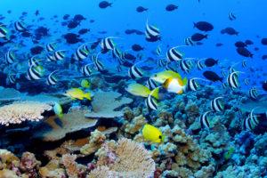 Подводный мир Маврикия
