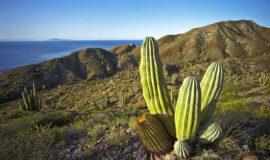 Мексиканский пейзаж