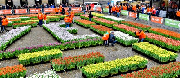 День тюльпанов, Амстердам