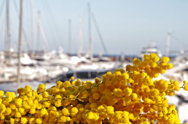 Праздник мимозы на Лазурном берегу