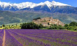 Туры в Прованс на лавандовые поля