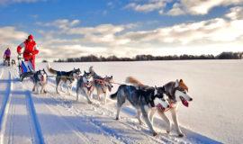 Катание в собачьих упряжках